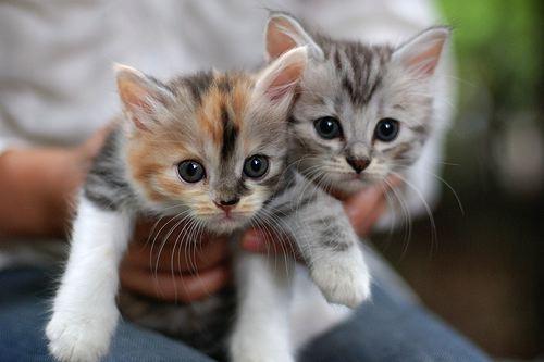 More kittens!