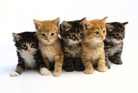 Alternating kittens!