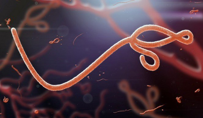 © Should we fear an Ebola outbreak in the US?