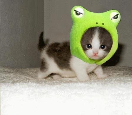 cute-kitty-frog2.jpg